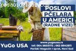 Potrebni P�elari za rad u Americi