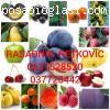 Rasadnik PETKOVIC - vocne sadnice