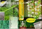 Sveze zacinsko bilje i salate na vasoj adresi